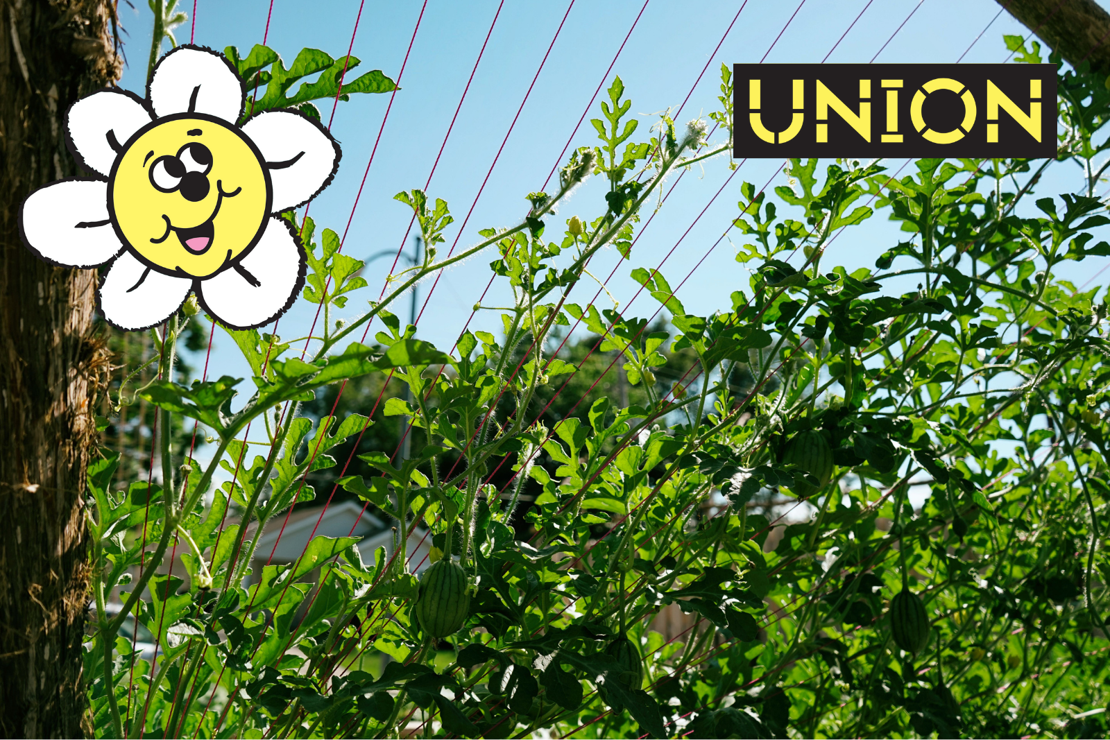 Homepage photo of a vine clibing a trellice A smiling cartoon flower is in the top right corner and the Union block logo is in the right